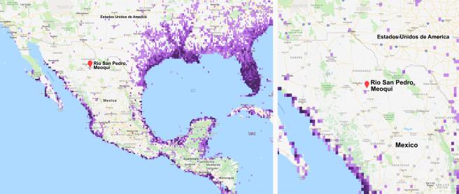 Figura 1.- Mapa de observaciones registradas del ibis blanco. Mapa extraído de https://ebird.org/species/whiibi?siteLanguage=en_US