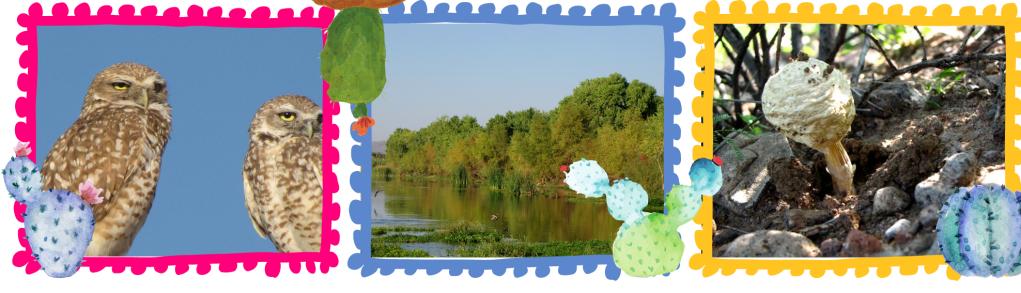 Imágenes de la problemática del río San Pedro, la biodiversidad presente y las actividades de la comunidad para conservar el humedal